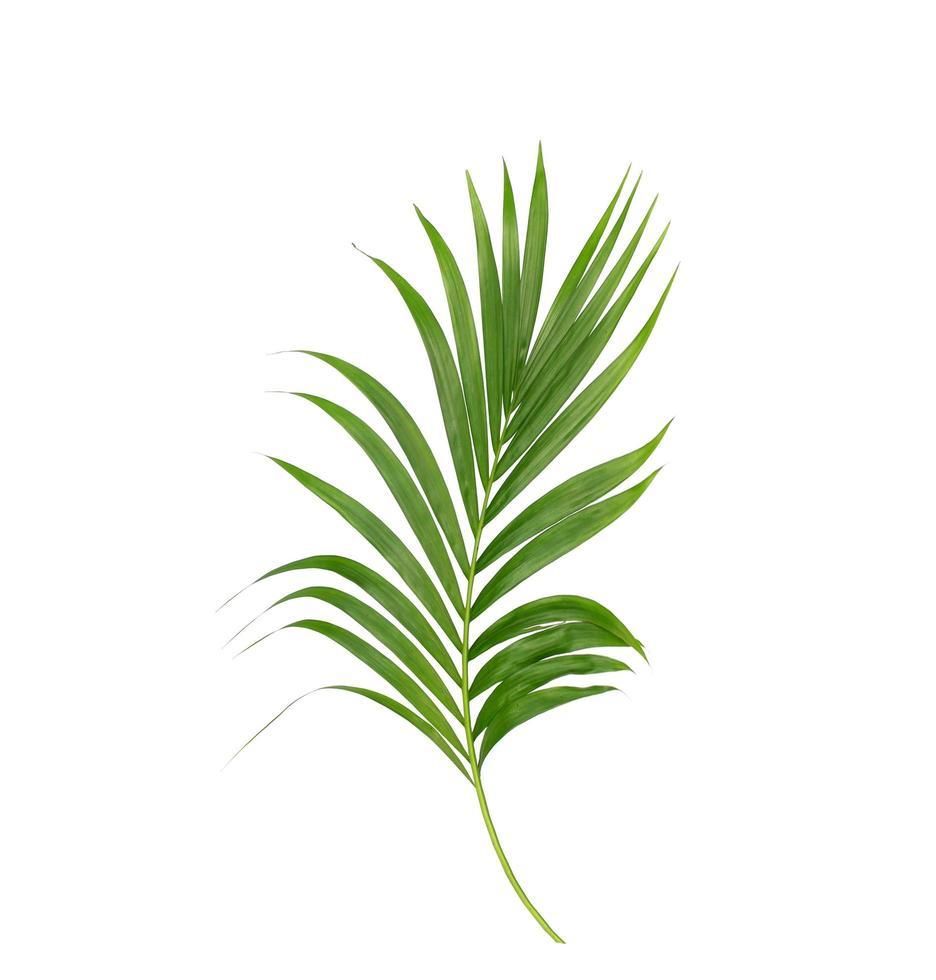 palmera verde tropical foto