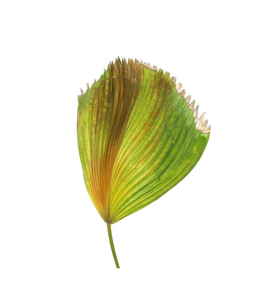 palmera tropical verde y marrón foto
