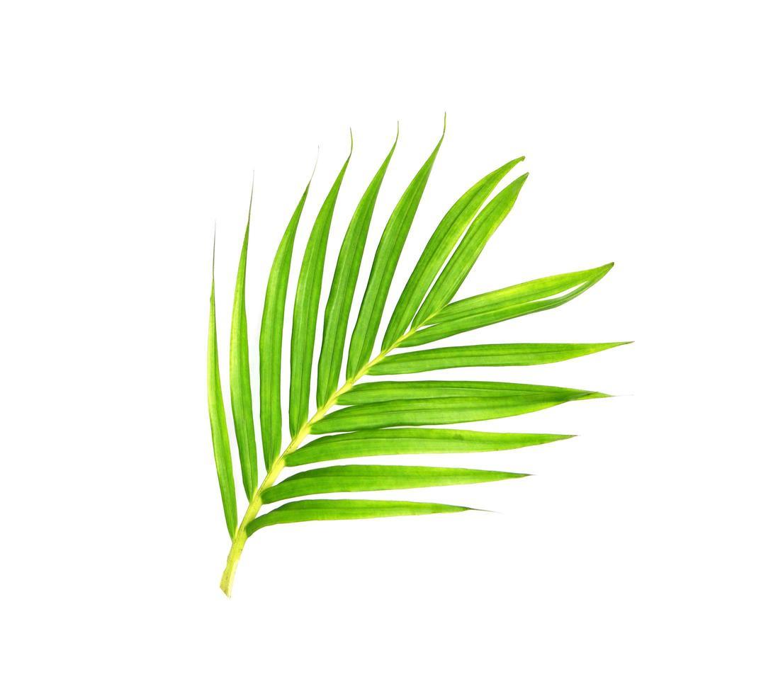 rama de palmera verde brillante curva foto