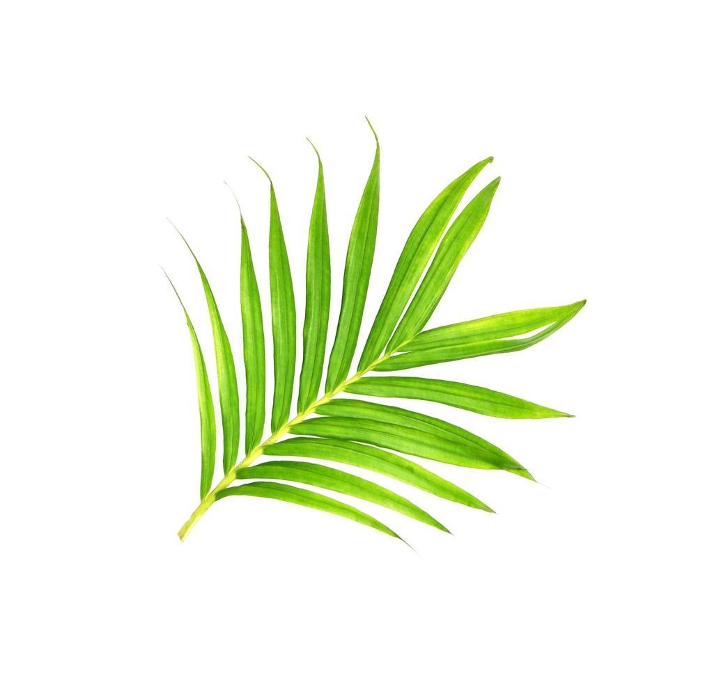 hojas verdes brillantes sobre blanco foto