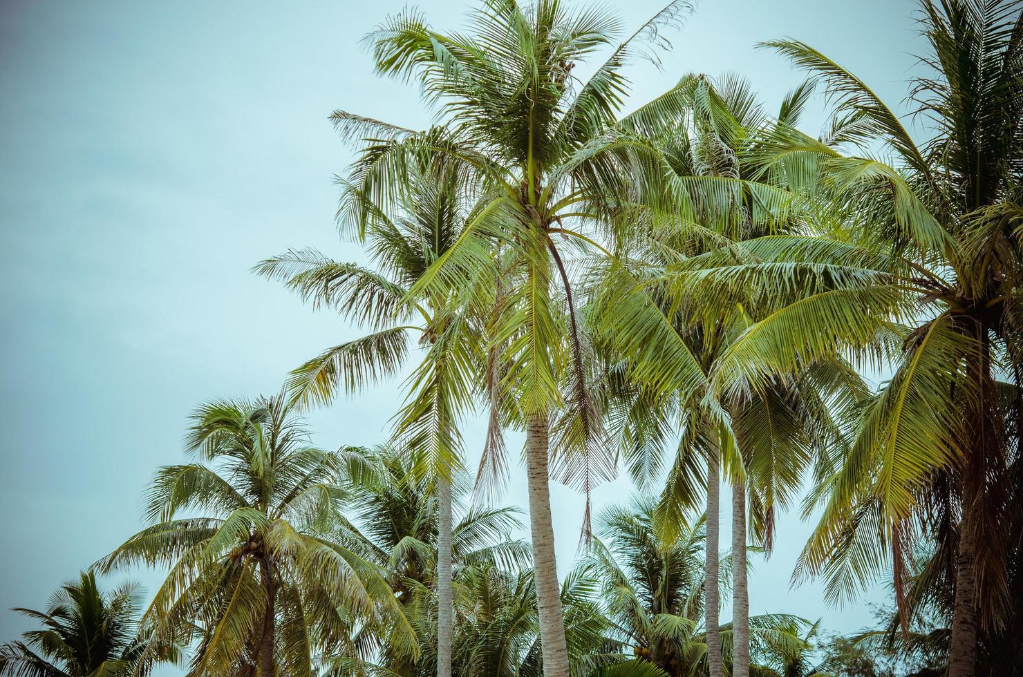 palmeras con un cielo azul foto