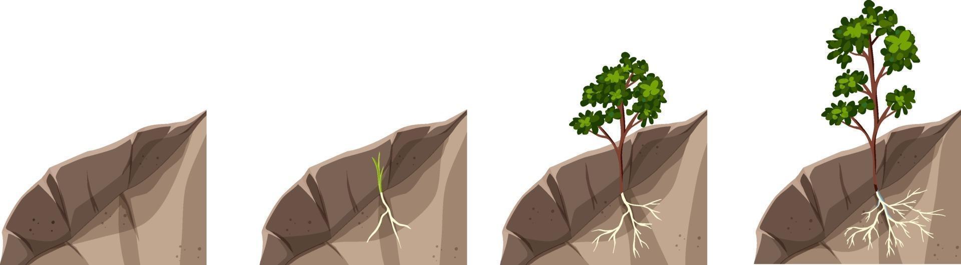 etapas de crecimiento de la planta aisladas sobre fondo blanco vector