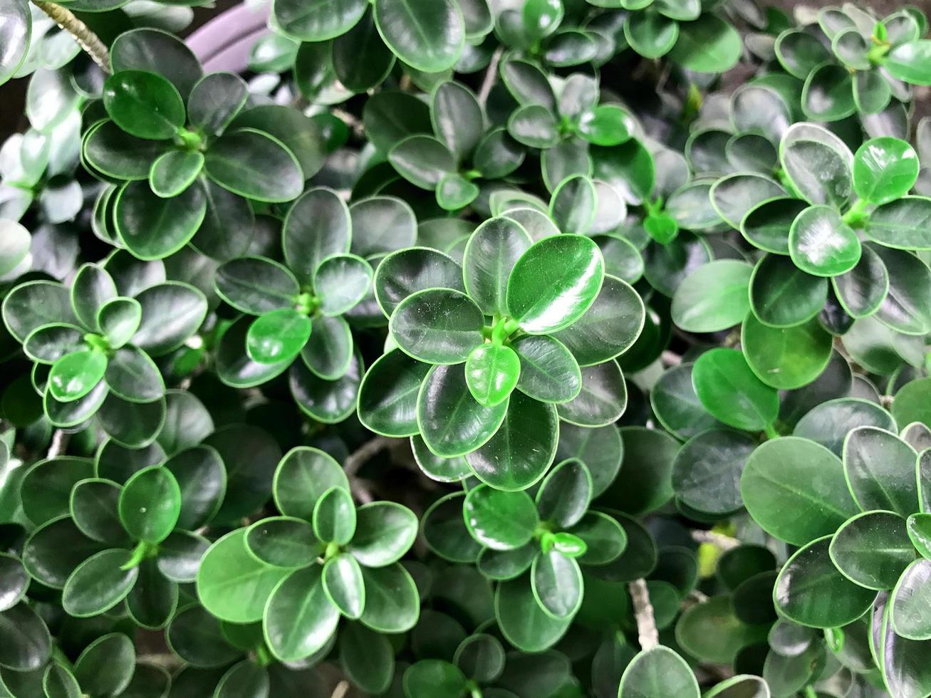 hojas verdes brillantes afuera foto