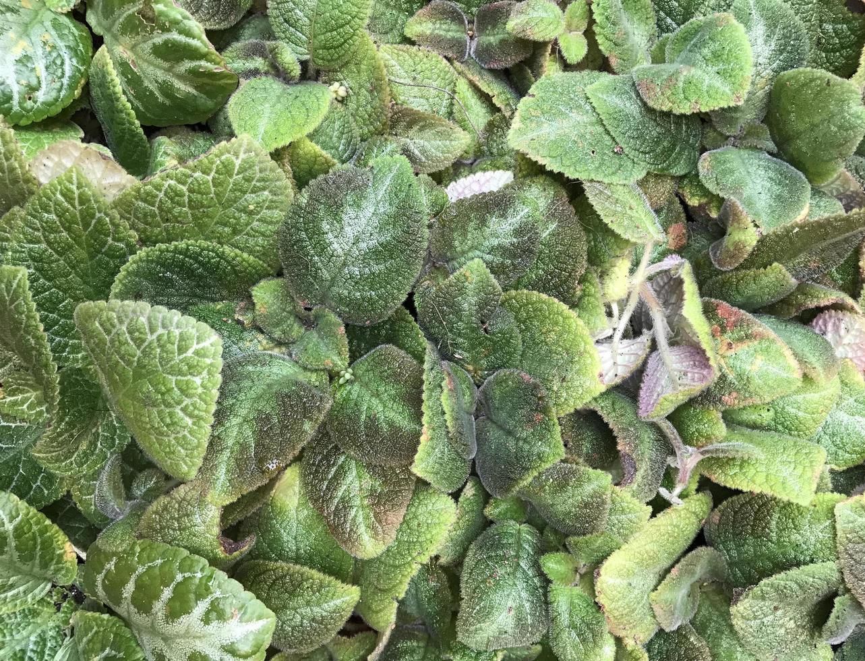 hojas verdes difusas foto