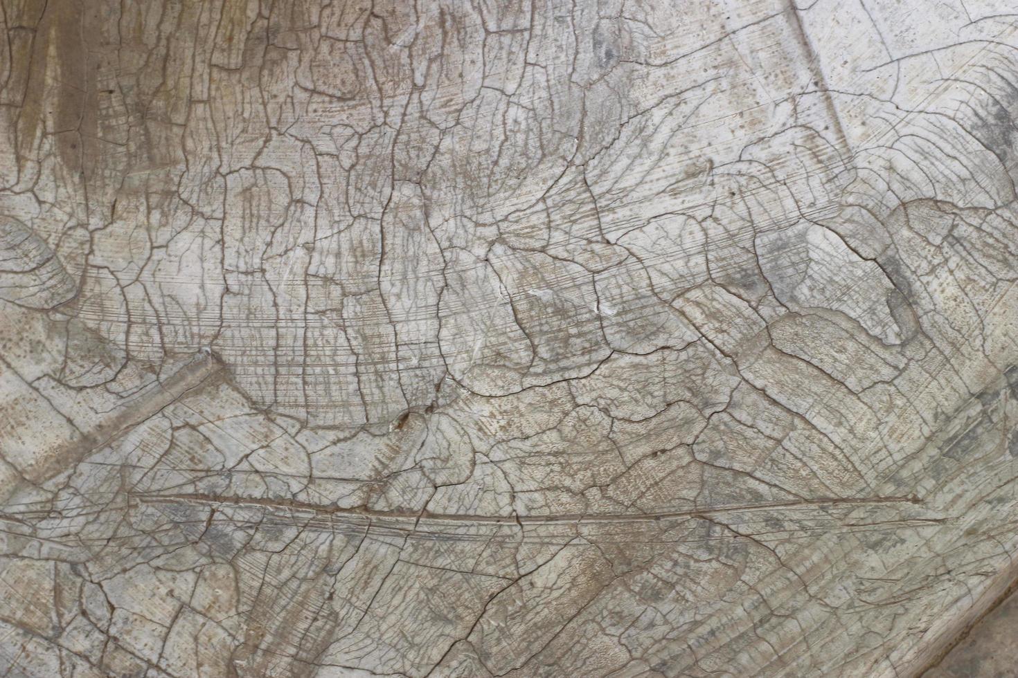 textura de hormigón agrietado foto