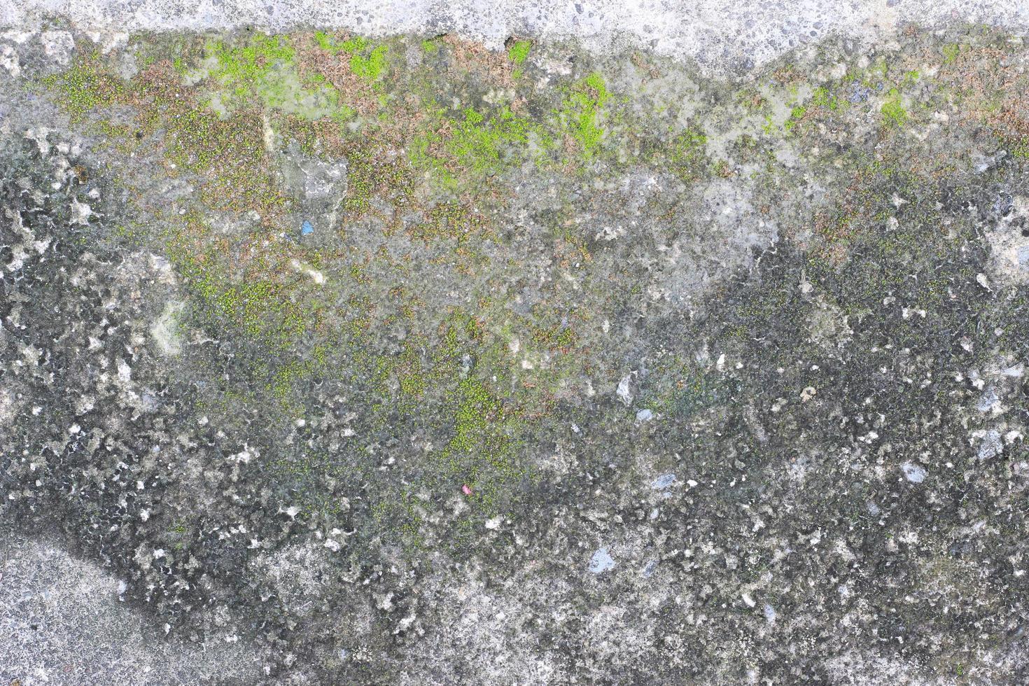 musgo en la superficie de la piedra foto