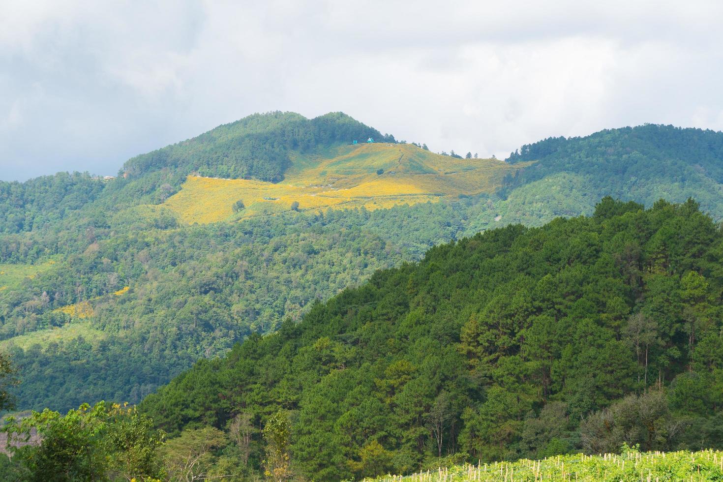 paisaje de bosque y montañas en tailandia foto