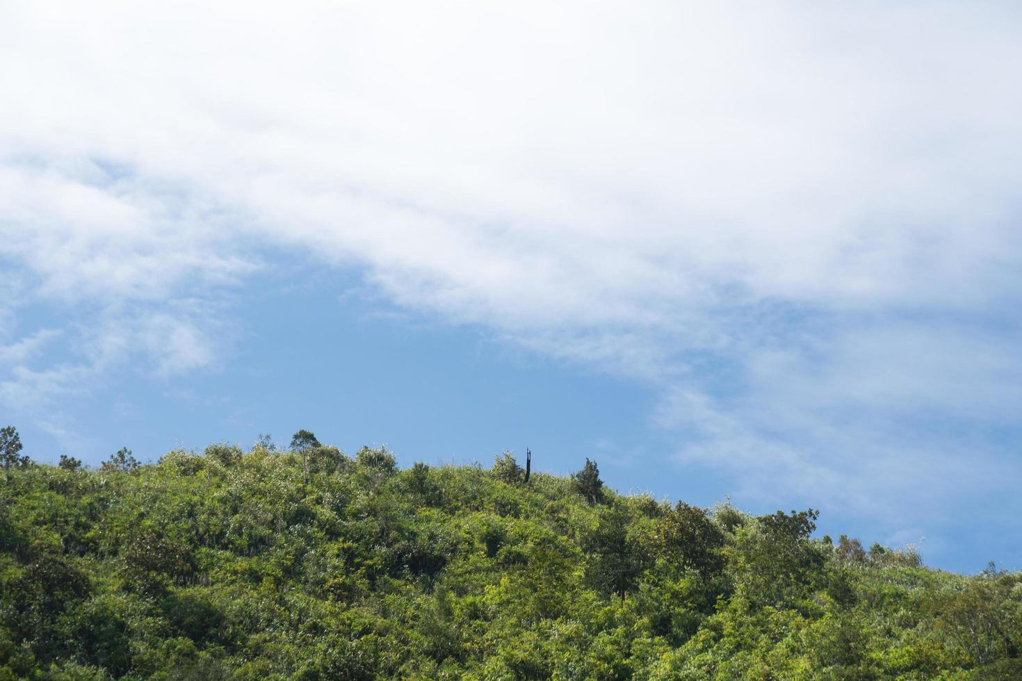 bosque en las montañas foto