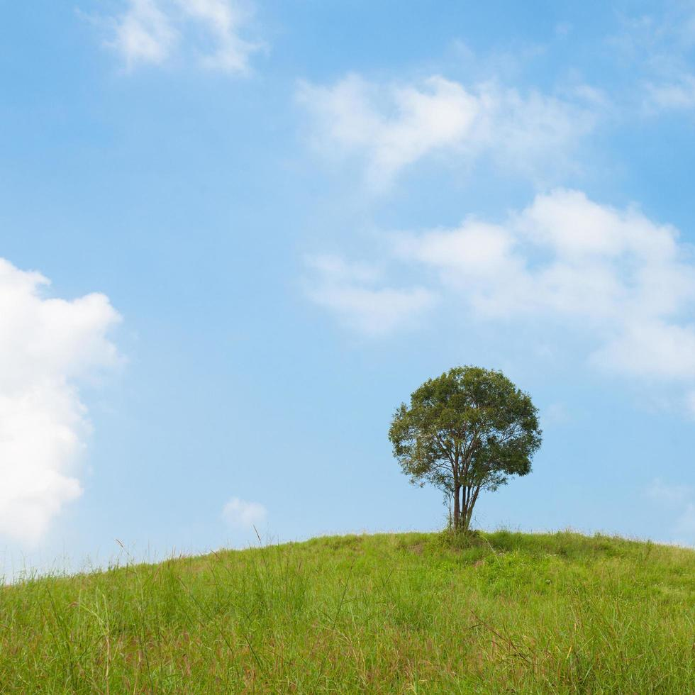 árbol en la colina foto