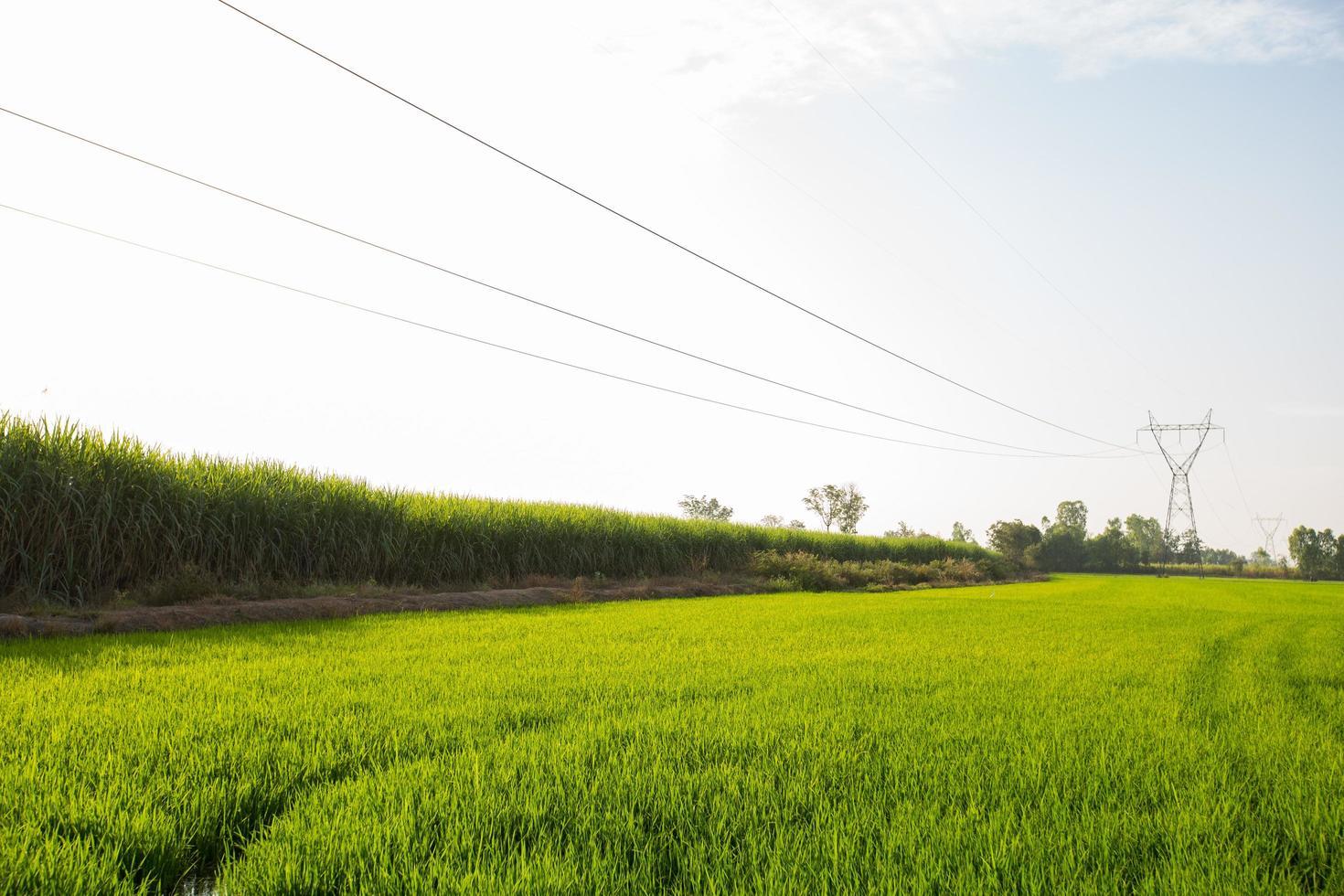 Líneas de transmisión de electricidad sobre campos de arroz. foto