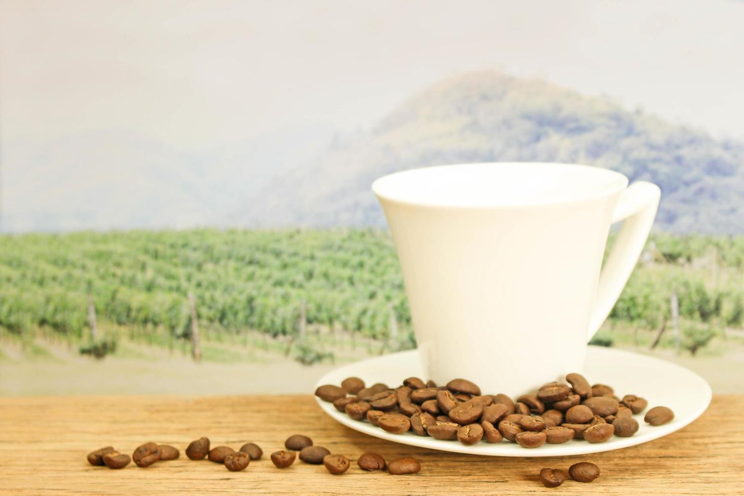 granos de cafe en frente del campo foto
