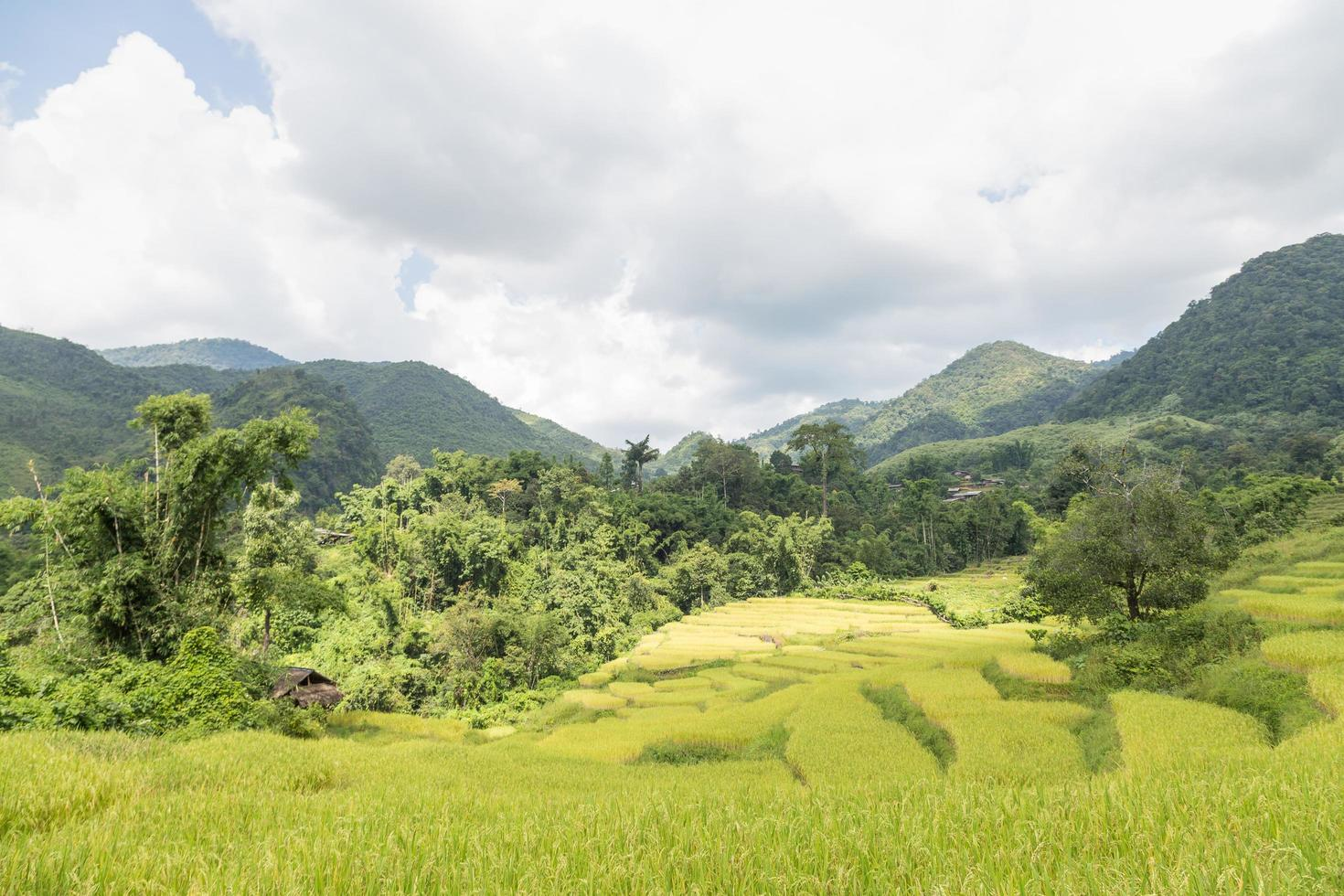 Rice farm on the mountain in Thailand photo