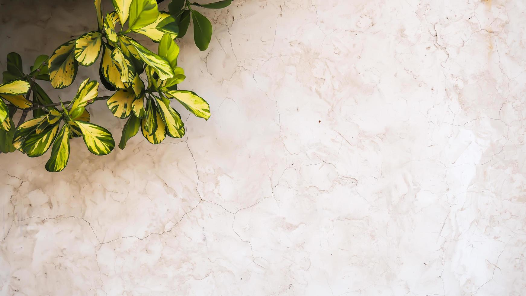 House plant on marble tile photo