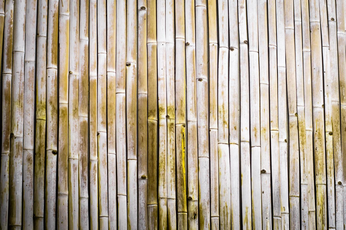textura de bambú seco foto