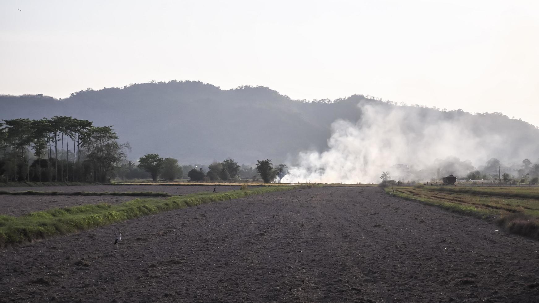 Smoke on a rural farm field in Thailand photo