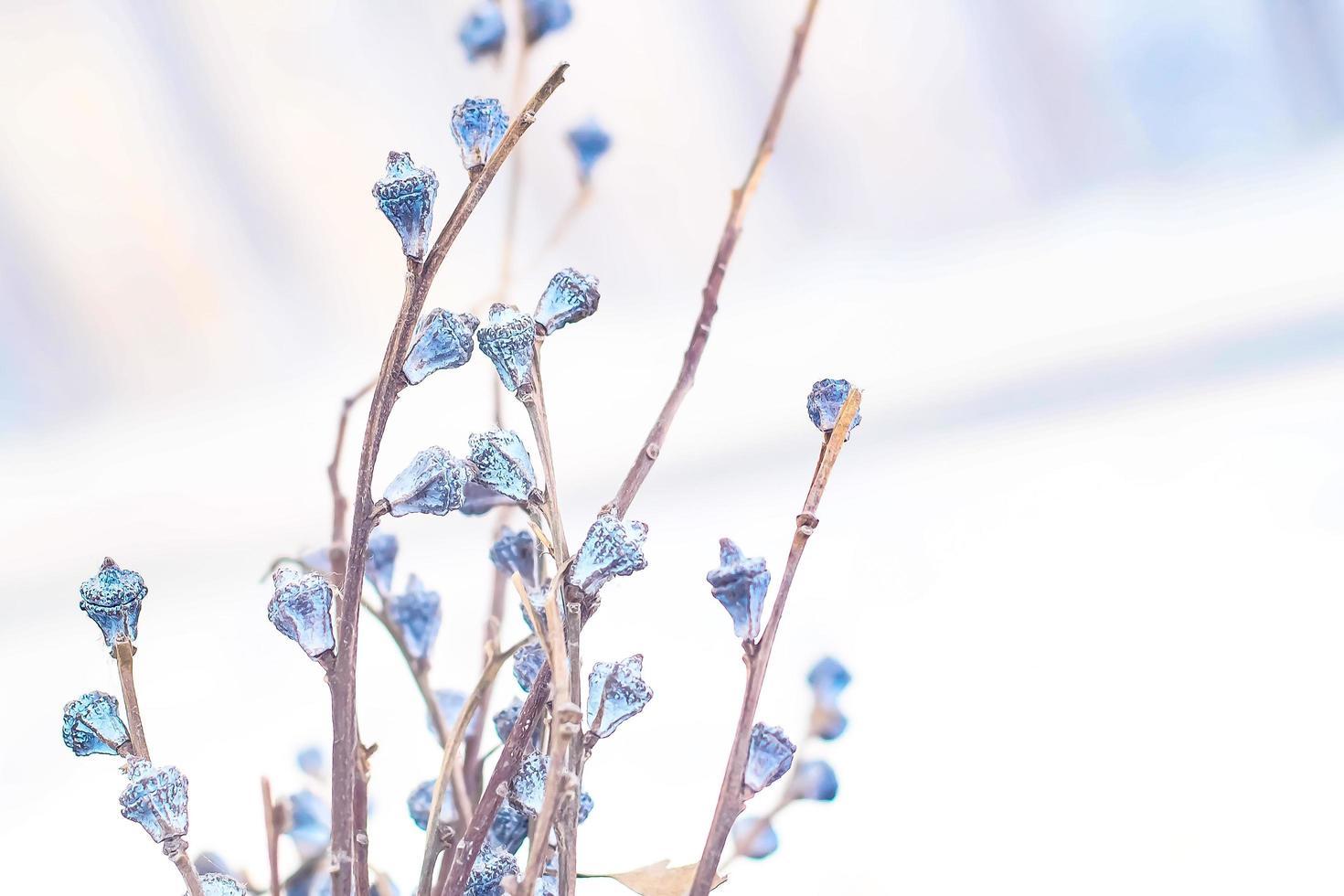 flores de pasto seco foto