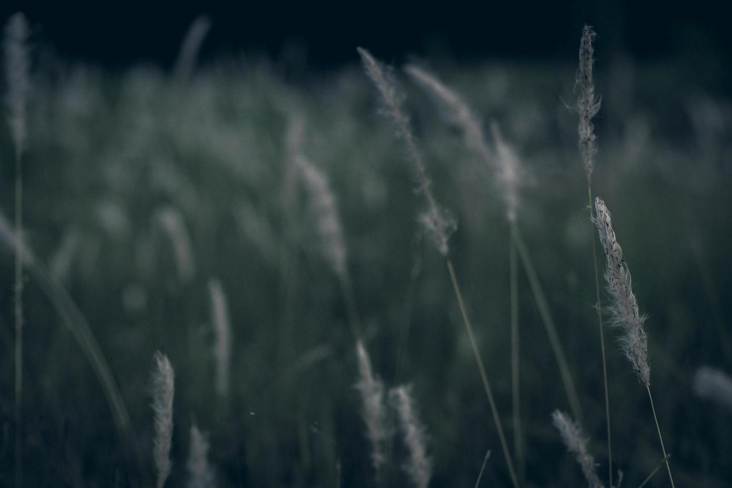 pastos silvestres en un campo foto