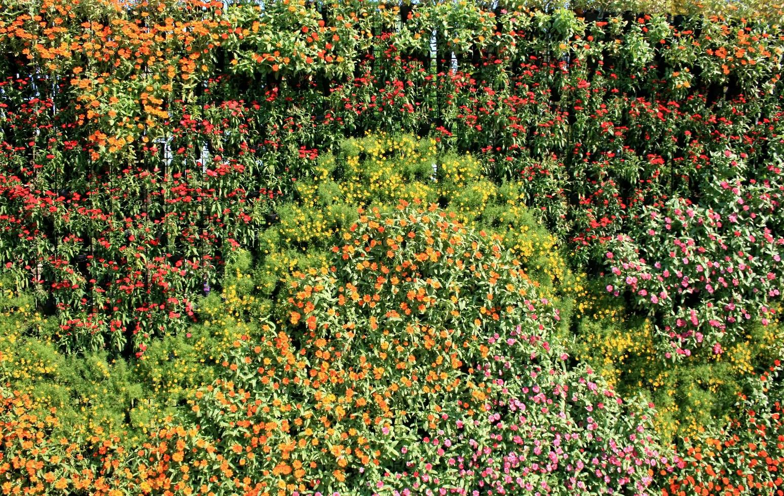 Colorful Flower Wall Stock Photo