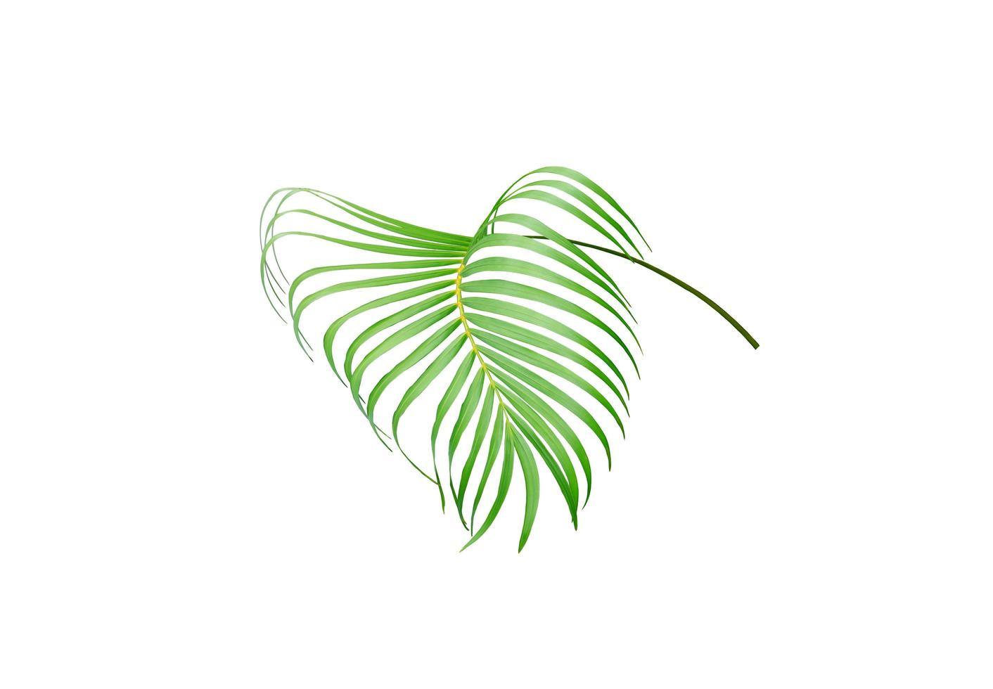 Green vivid leaf photo