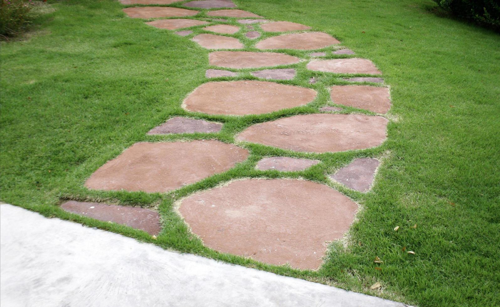 Walking path in grass photo