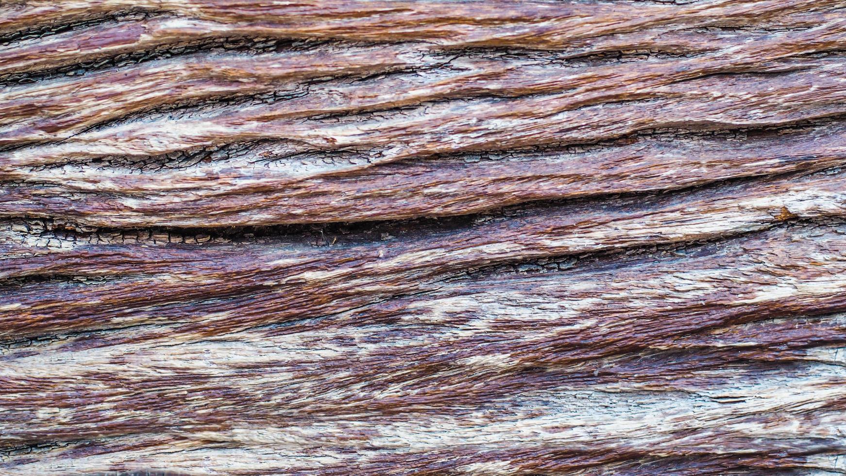 textura de corteza de árbol foto