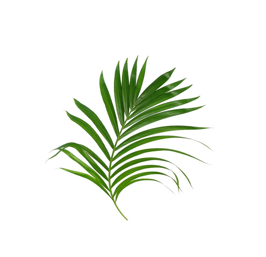 Tropical green leaves on white background photo