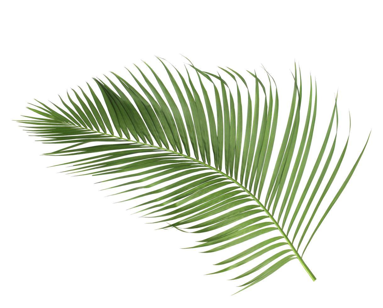 rama de coco aislado foto