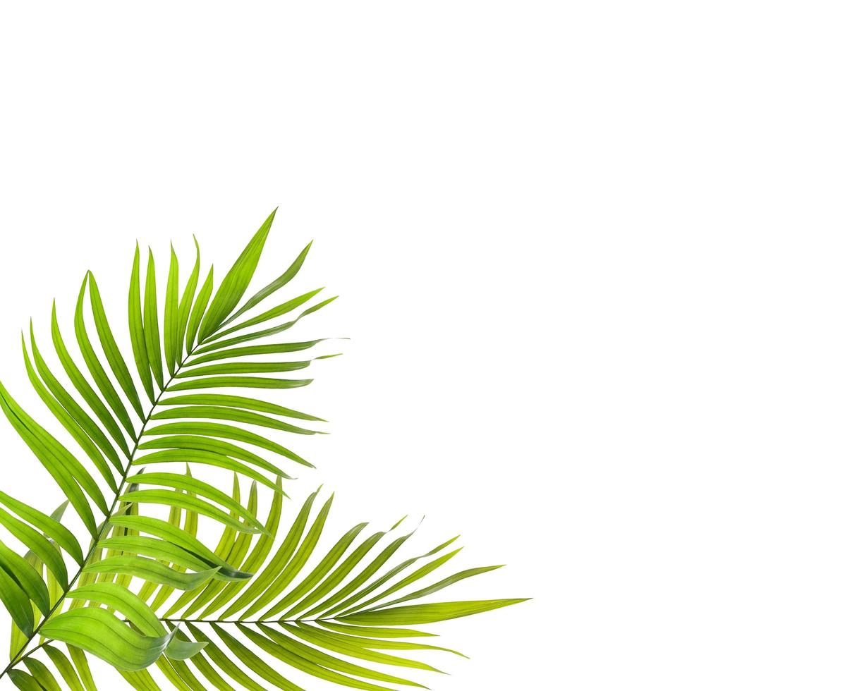Bright tropical leaves photo