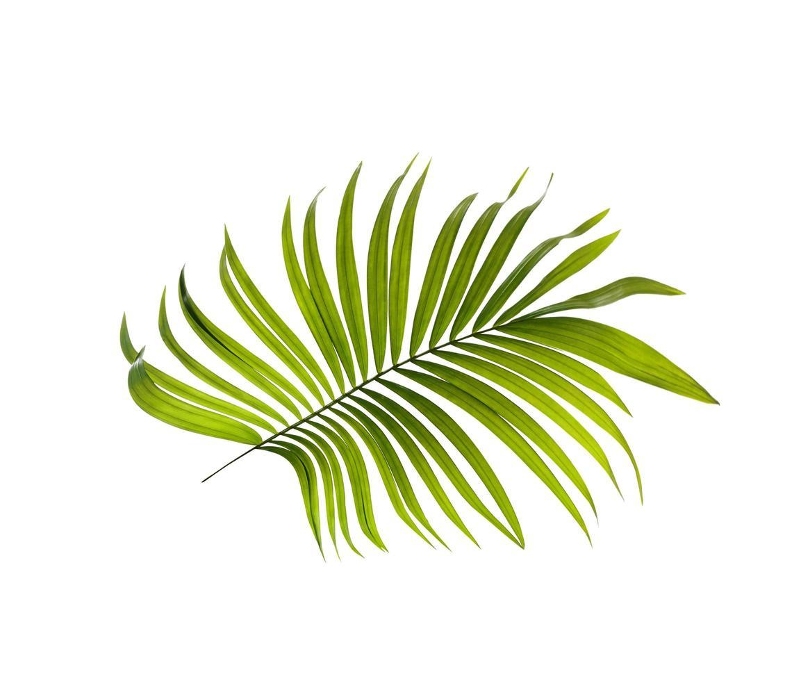 hoja tropical sobre una superficie blanca foto