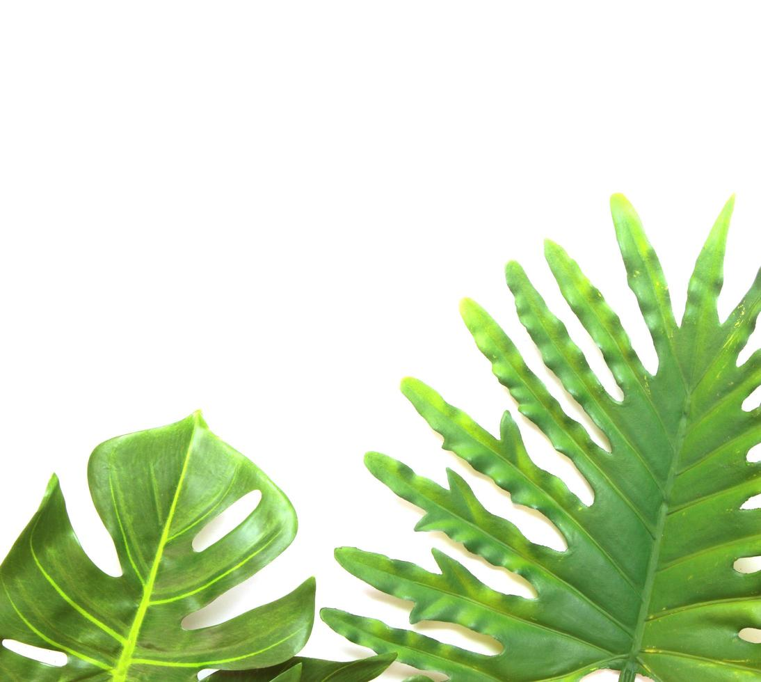 Two tropical leaves on white photo