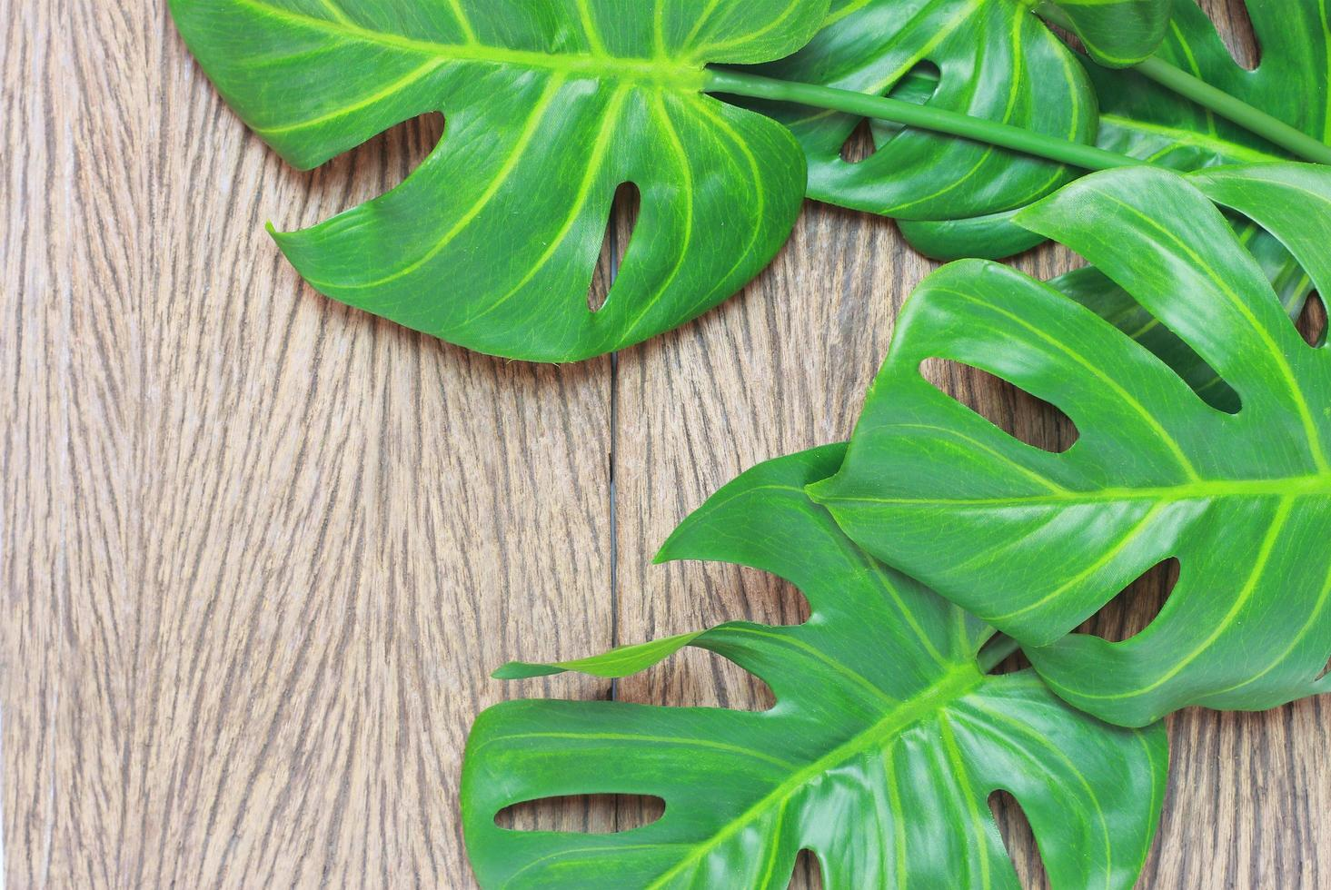 Bright green monstera palm leaves on wood photo