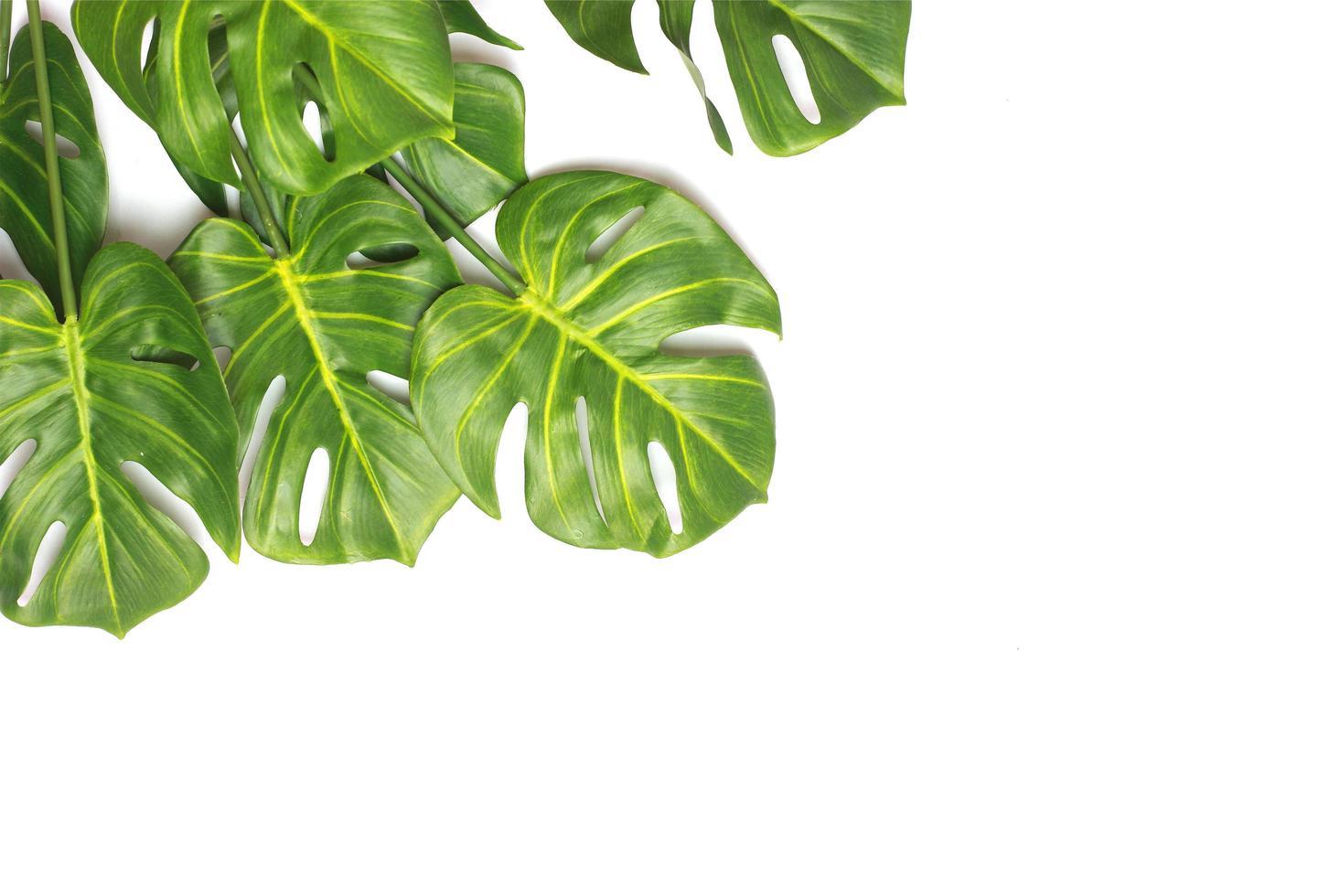 Monstera palm leaf flat lay photo