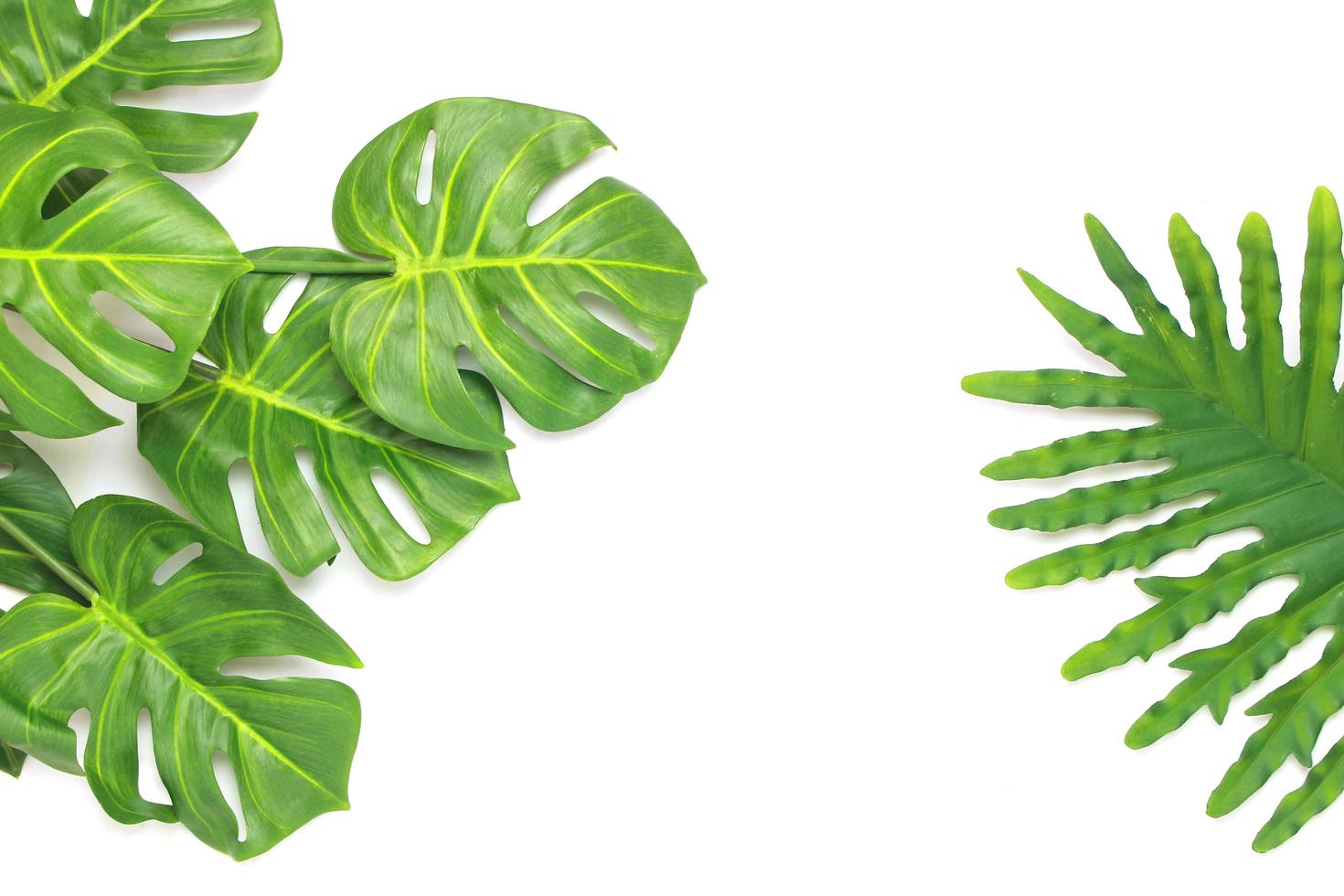 Tropical philodendron and monstera palm leaves photo