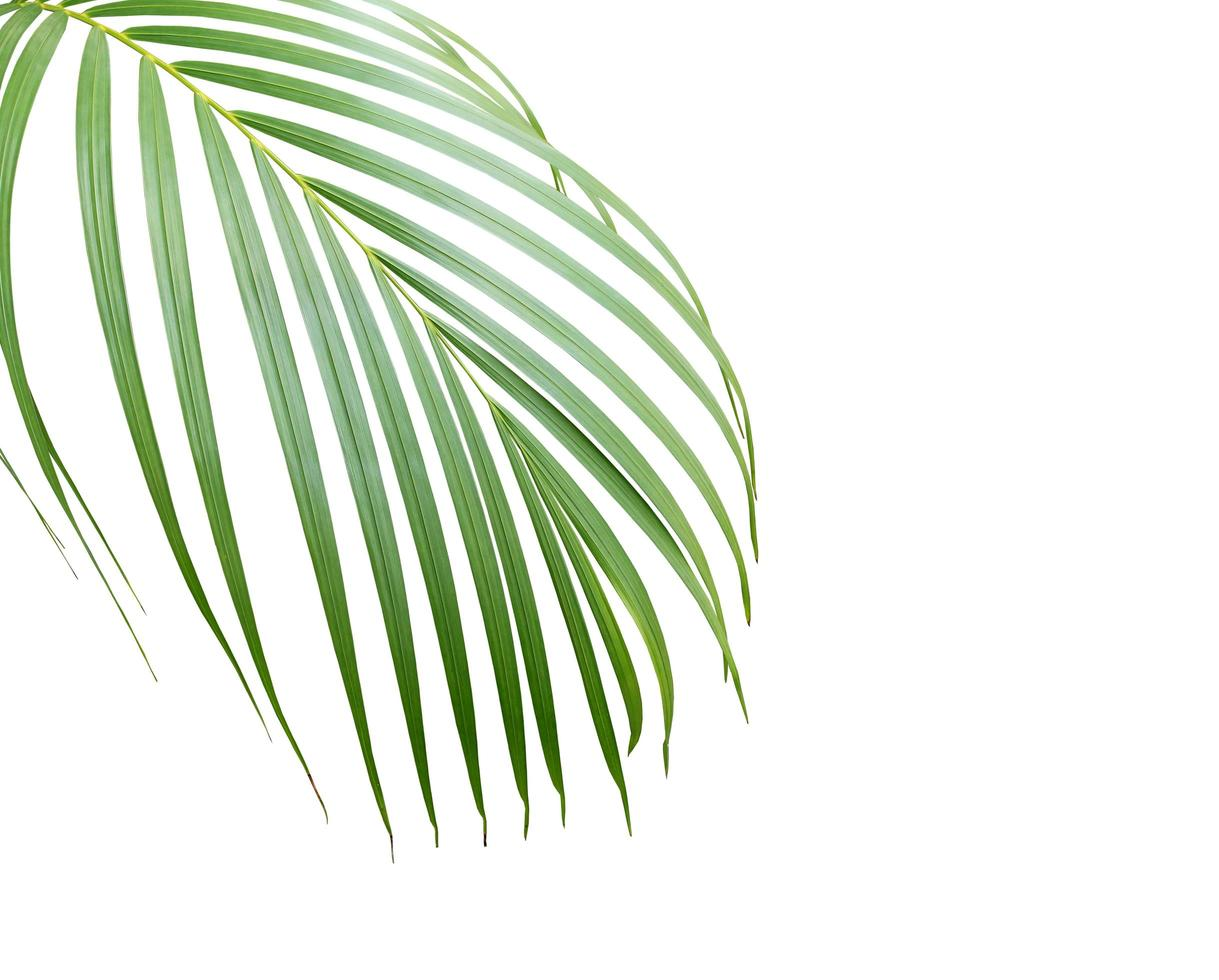 Lush tropical leaf with copy space photo