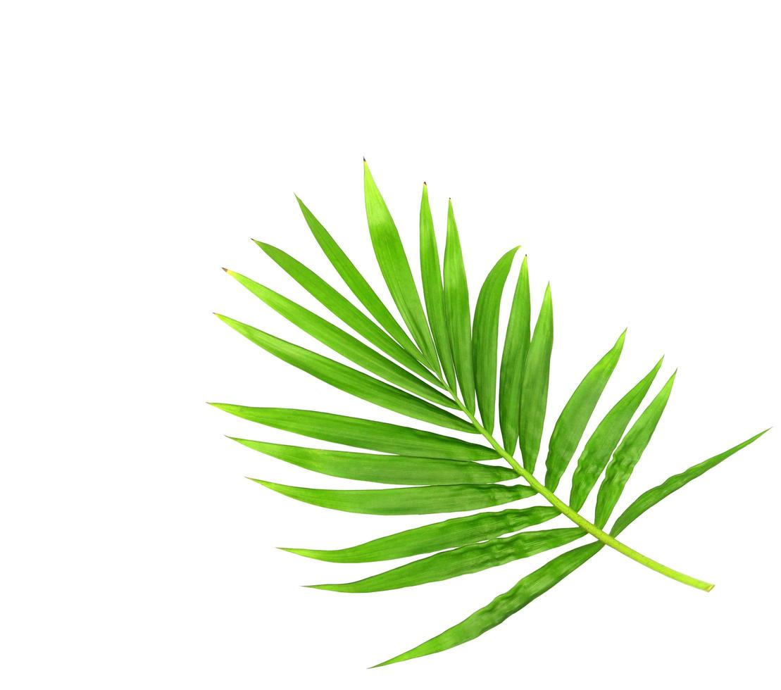 rama verde brillante vibrante foto