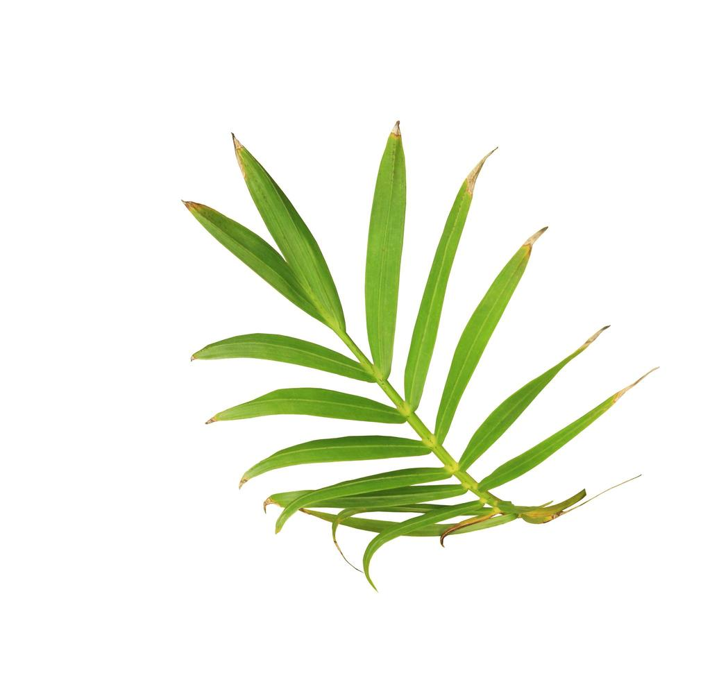 rama curva de hojas foto