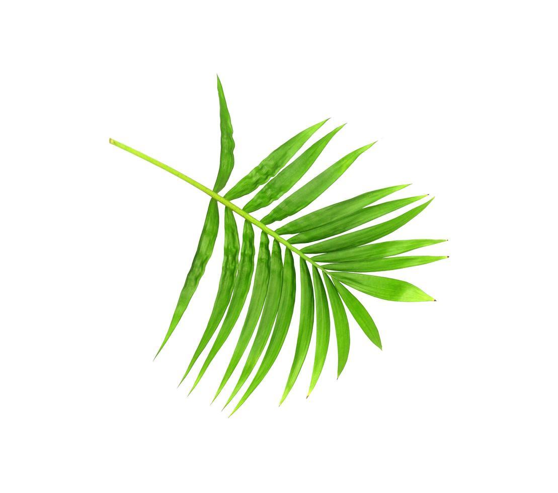 rama verde brillante foto