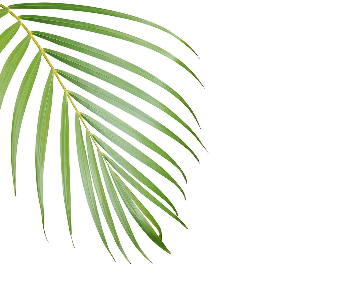 Palm tree leaf with copy space photo