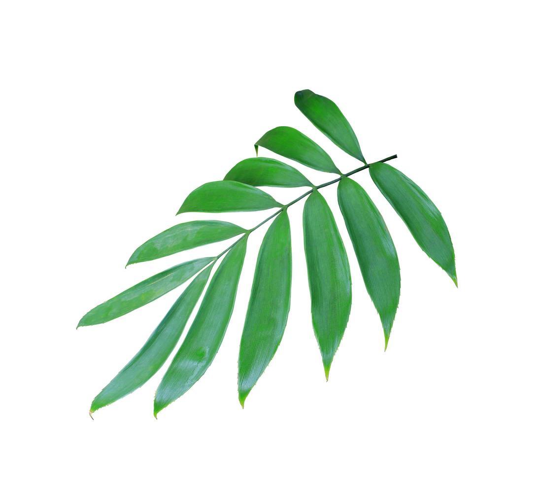 hojas verdes aisladas sobre fondo blanco foto