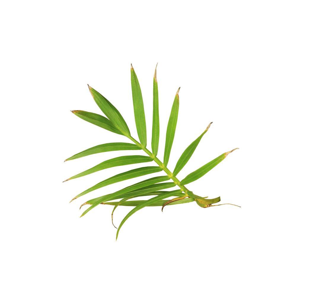 hojas verdes en una rama foto