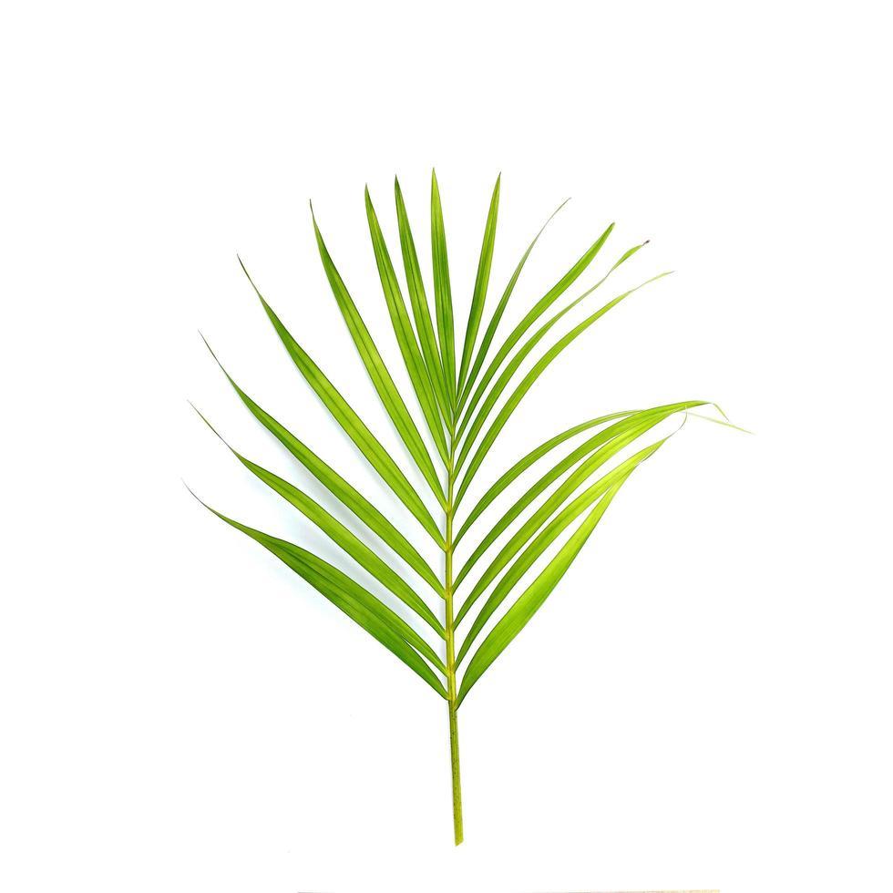 hoja de palmera tropical brillante foto