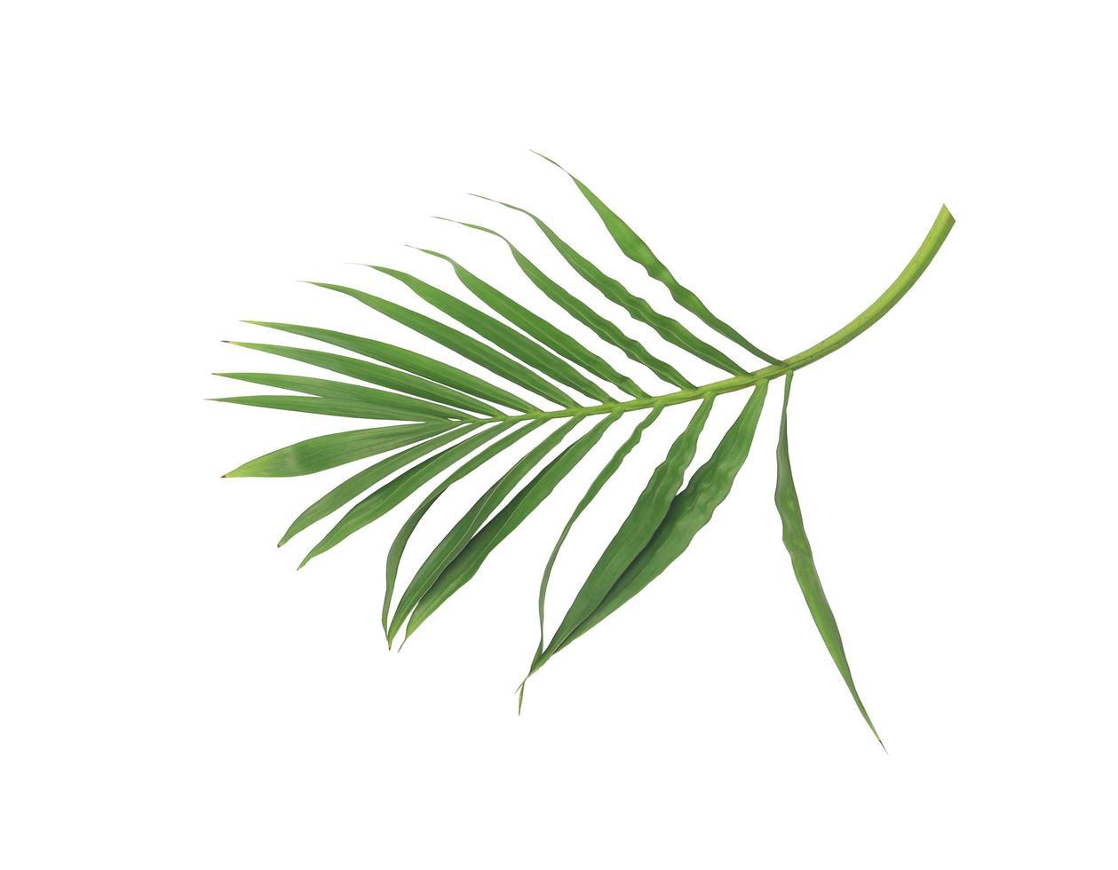 exuberantes hojas verdes en una rama foto