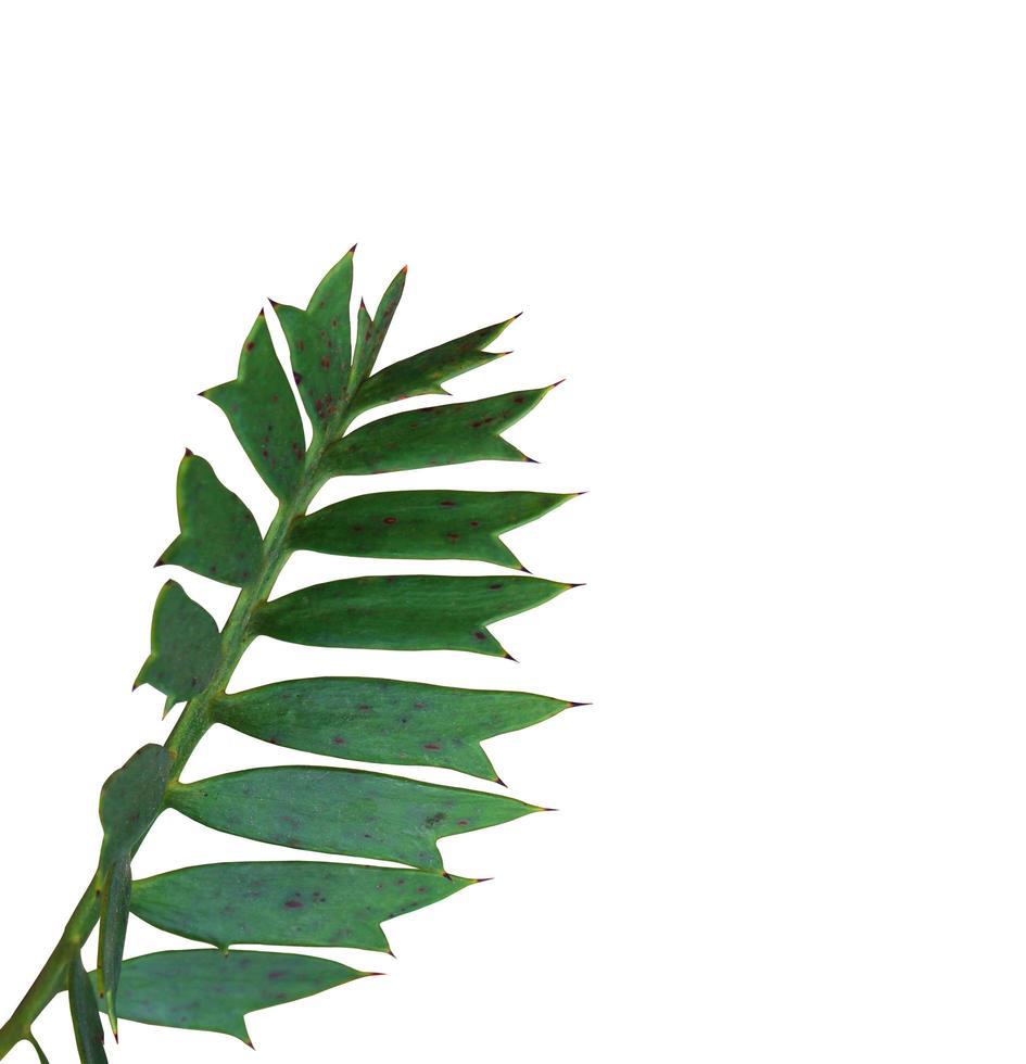 hojas verdes naturales foto
