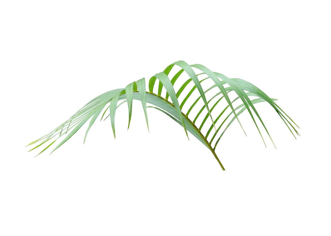 exuberante hoja de palmera tropical foto