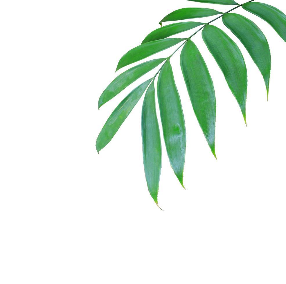 exuberantes hojas verdes con espacio de copia foto