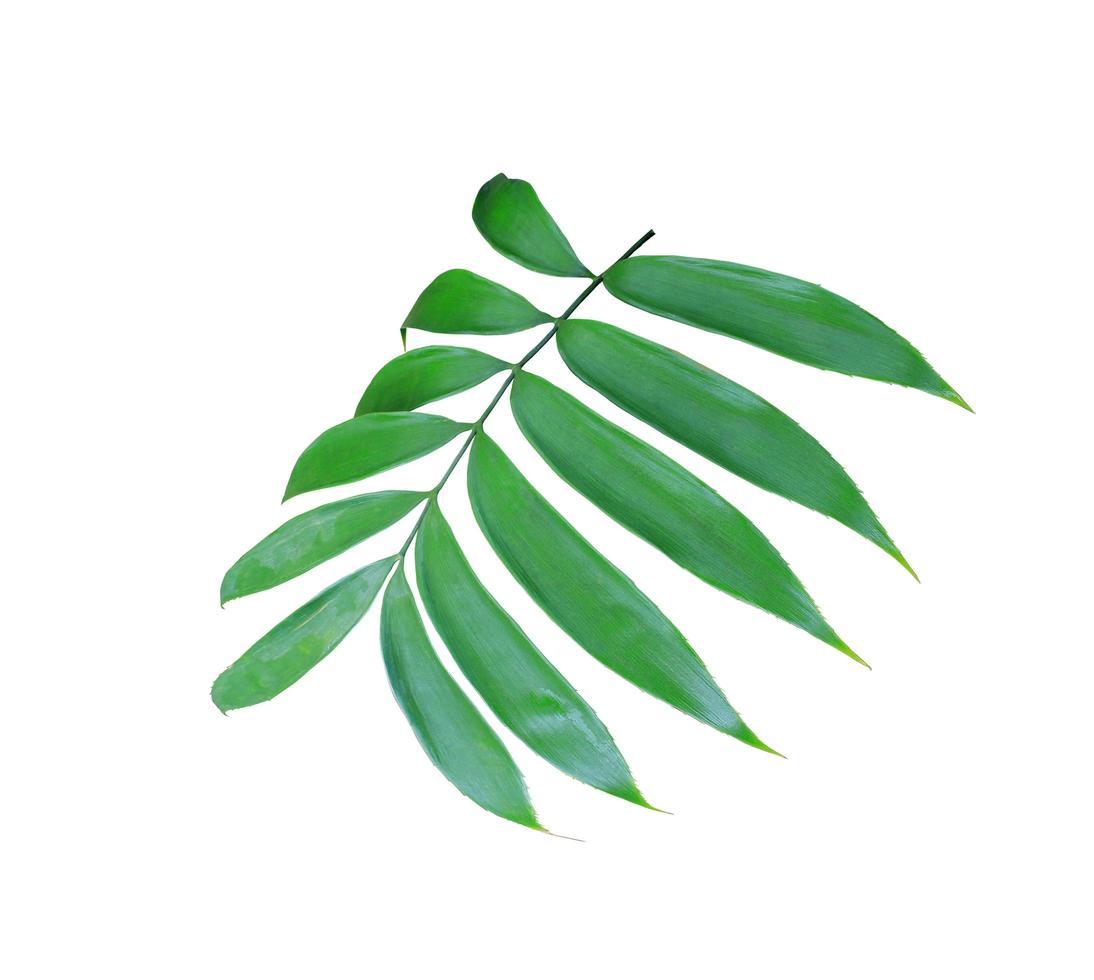 exuberante rama de hoja verde foto