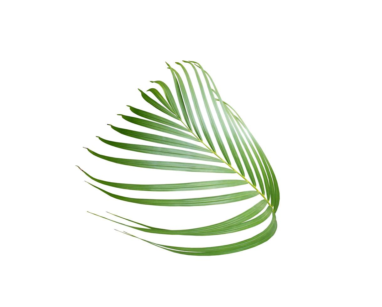 Palm leaf branch isolated on a white background photo