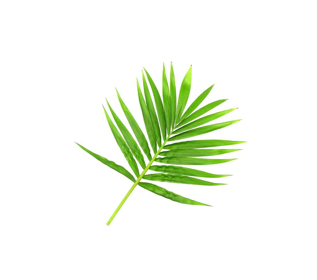 hojas de color verde claro vibrante en una rama foto