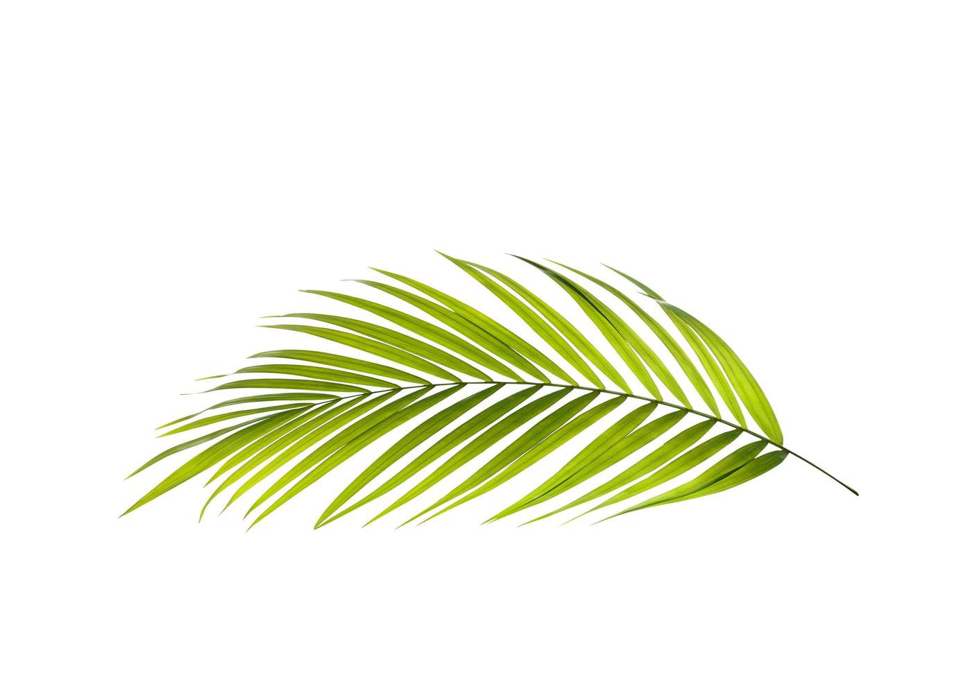 rama de palmera verde vibrante foto