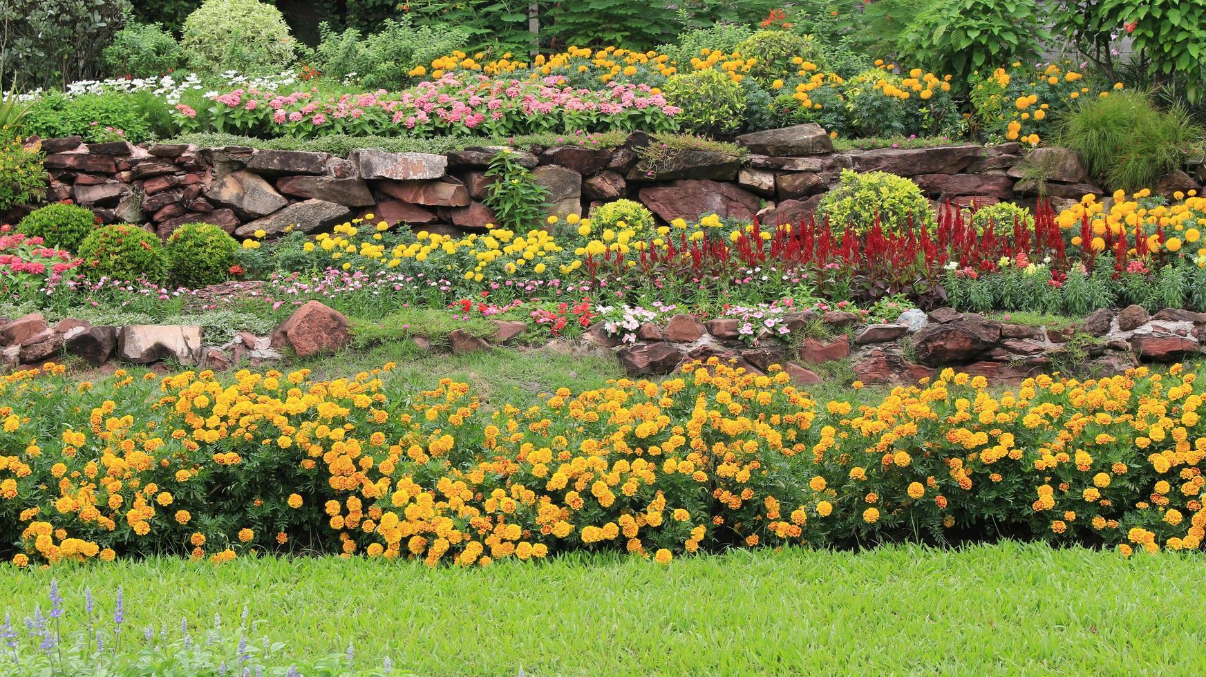 Macizos de flores de varias capas en el jardín foto